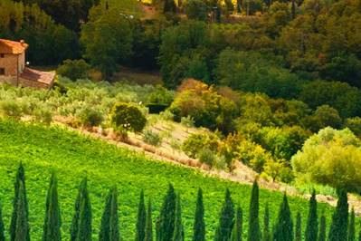 Best Italy twin-centre wine holidays